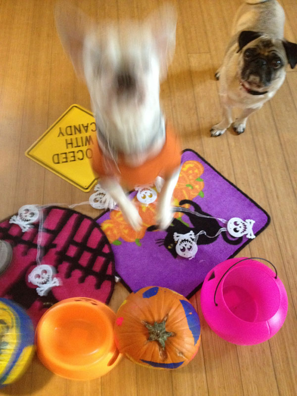 7 Tips for Keeping Your Dog Safe on Halloween