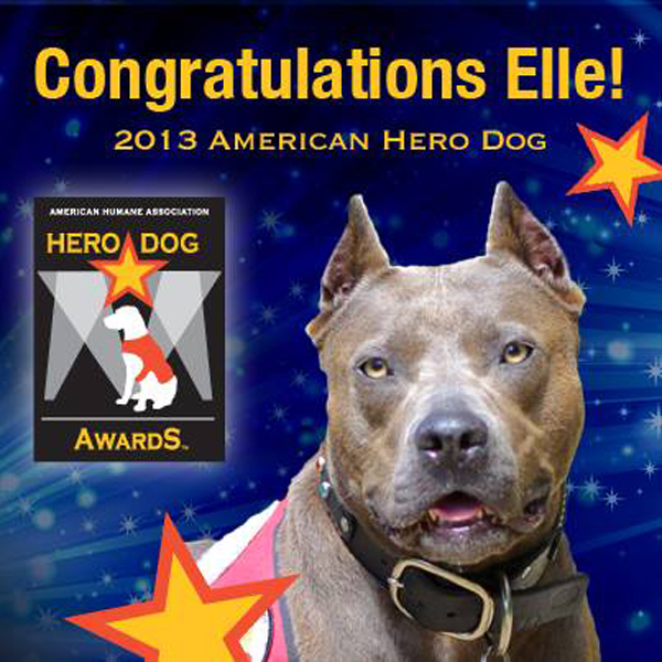 Elle the Pit Bull Is Named Top American Dog Hero for 2013