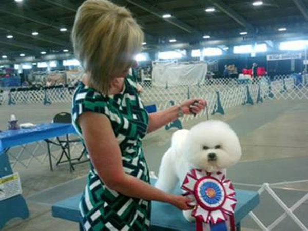 Philadelphia Kennel Club Dog Show  Herding Group Winners