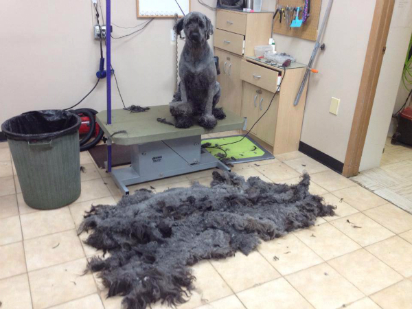 Dogster dog grooming on feedspot rss feed solutioingenieria Image collections