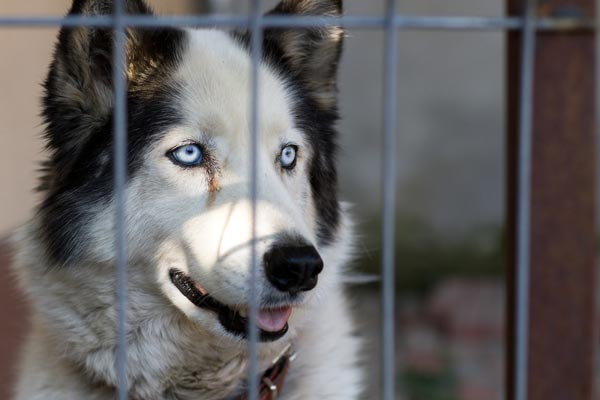 """Is Adopting Shelter Dogs Really a """"Crapshoot""""? The Facts Say No"""