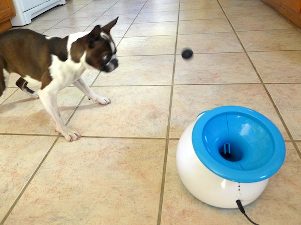 ball thrower for dogs. we test the ifetch, automatic ball launcher your dog can operate herself thrower for dogs \