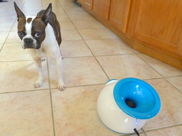 We Test The Ifetch The Automatic Ball Launcher Your Dog