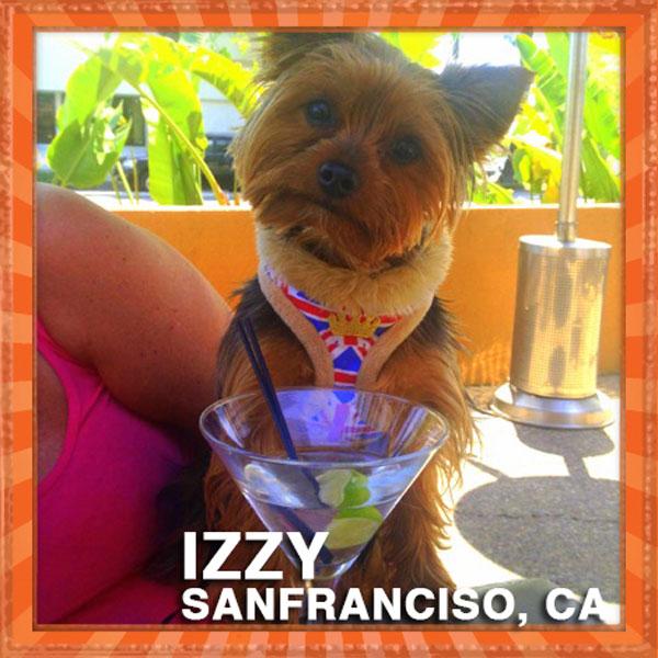 Whose dog is spud on celebrity juice feet