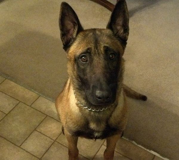 Facebook Followers Help Return Police Dog to His Partner