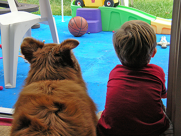 How Kids Can Help Dogs Feel Safe