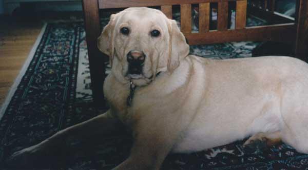 Remembering Kilgore Trout, My Best Friend Until the End