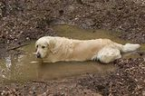 Does Your Dog Prefer to Be Dirty or Clean?