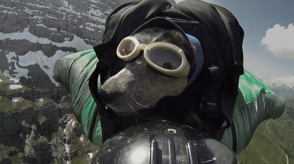 Watch This Dog BASE Jump Off a Cliff in a Wingsuit