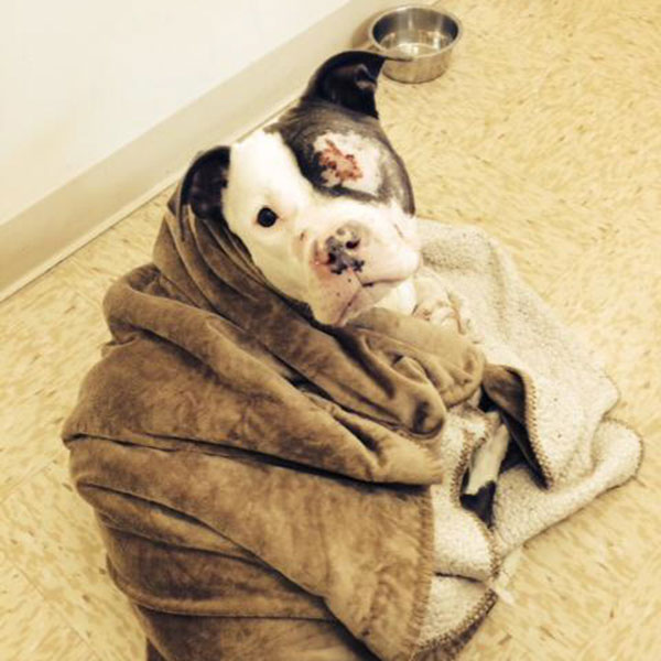 Lexi the Pit Bull Has a Big Tumor — But a Lot of Friends