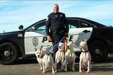 A Photo of a Police Officer and His Five White, Deaf Dogs Goes Viral