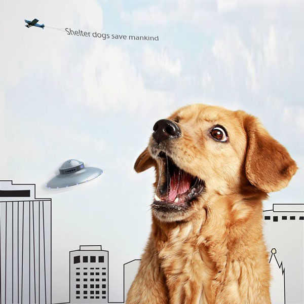 Who Will Save Us from an Alien Attack? Loyal Shelter Dogs