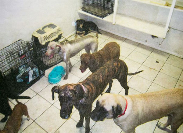 Dogs at the Green Acre Dog Care facility. Owners say that they were only shown the open grounds around the house, and never shown the small room the dogs were kept in at night. (Maricopa County Sheriff's Office)