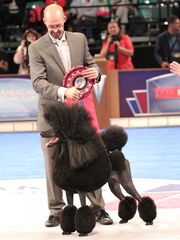Here's Who Won the AKC/Eukanuba National Championship Dog Show