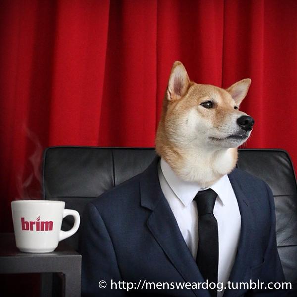 Hey, Gawker: Is Dressing Up a Shiba Inu REALLY Animal Cruelty?
