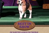 Money Talks at the Westminster Dog Show — or Does It?