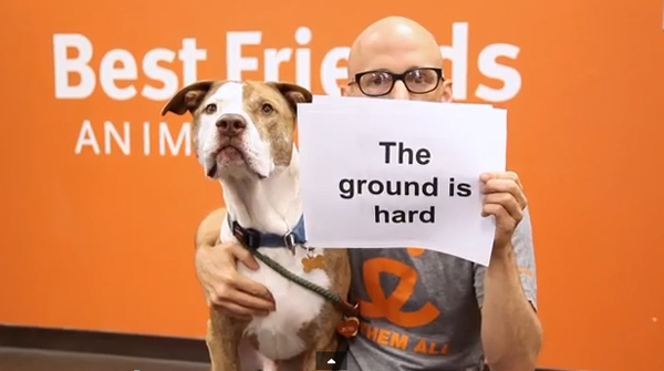 Moby Snuggles Up to Adoptable Dogs in His New Video