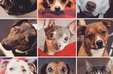 Motley Zoo Animal Rescue Works With Rock Stars to Find Dogs Homes