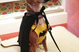 Editor's Picks: Four Halloween Favorites for Dogs