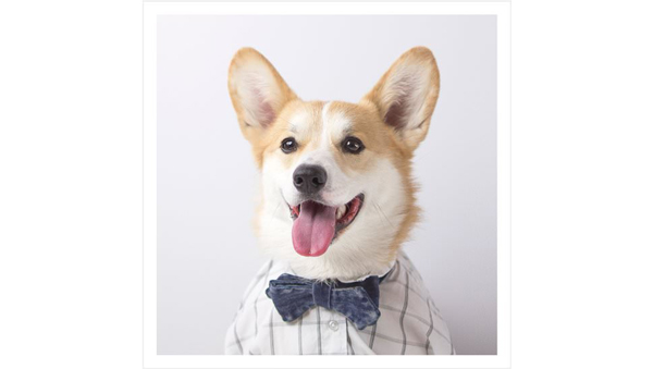 Look at These Stylish Dogs on Menswear Site Mr. Porter