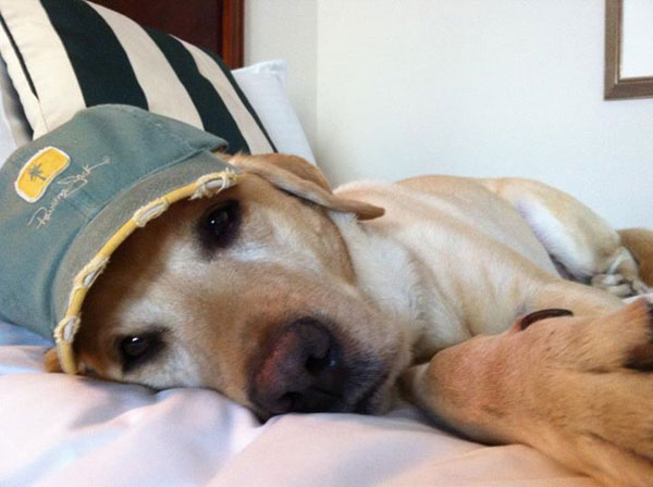 The 10 Biggest Misconceptions About Guide Dogs for the Blind Relaxing Dogs