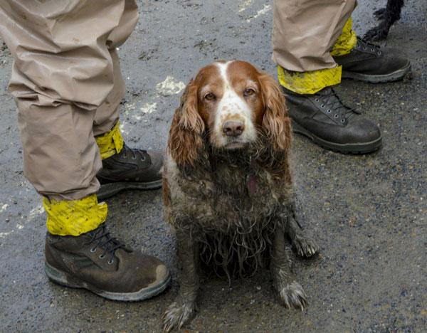 Hope Dogs Rescue Fema