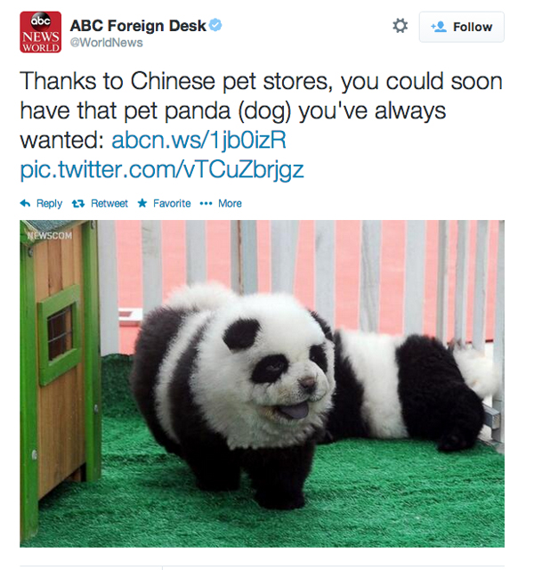 than a chow chow other than you know a panda