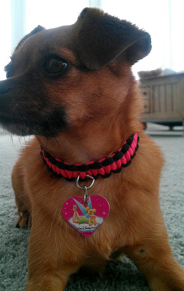 Dogster DIY: How to Make a Paracord Dog Collar