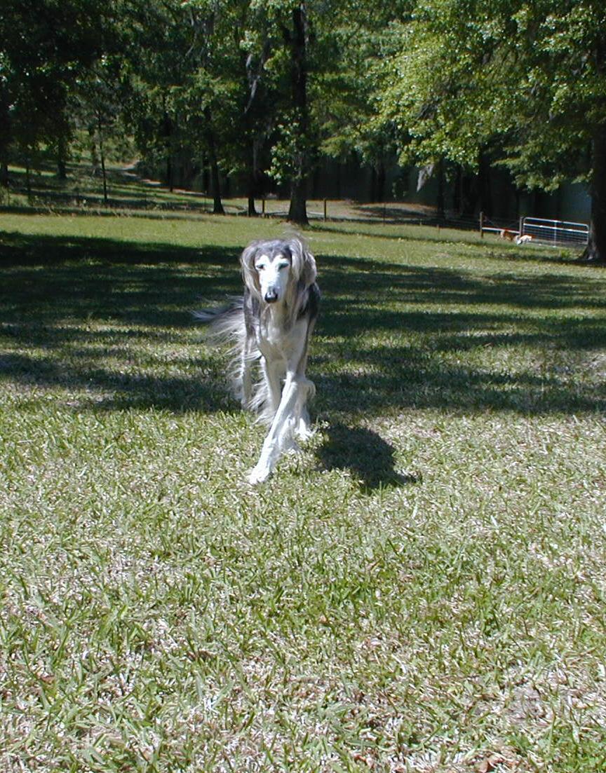 Dizzy Dog Syndrome: The Facts on Idiopathic Vestibular Disease
