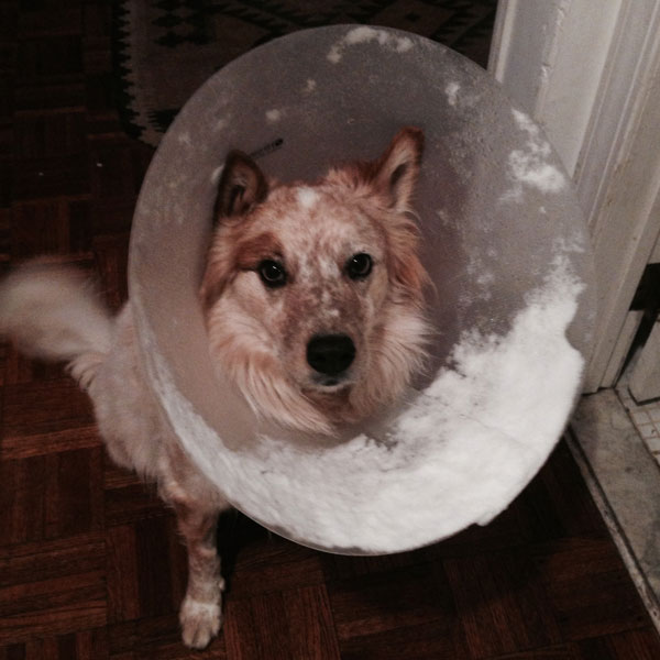5 Ways My Dog Used His Cone of Shame as a Tool