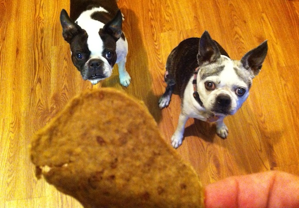 Win a Grain-Free Dog-Treats Pack From Zuke's