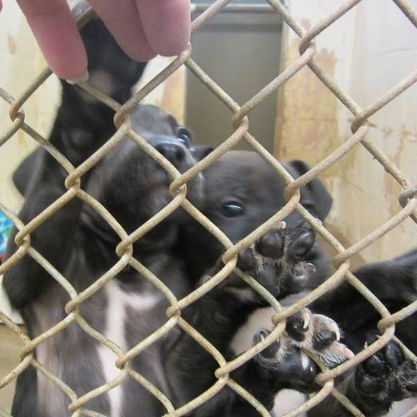 A Community Rallies Behind Its Animal Shelter at Christmastime