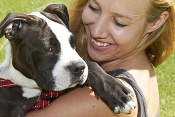 Breed-Specific Legislation Is Banned in Massachusetts