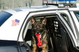 City Remembers Its K9 Officers With Their Own Cemetery