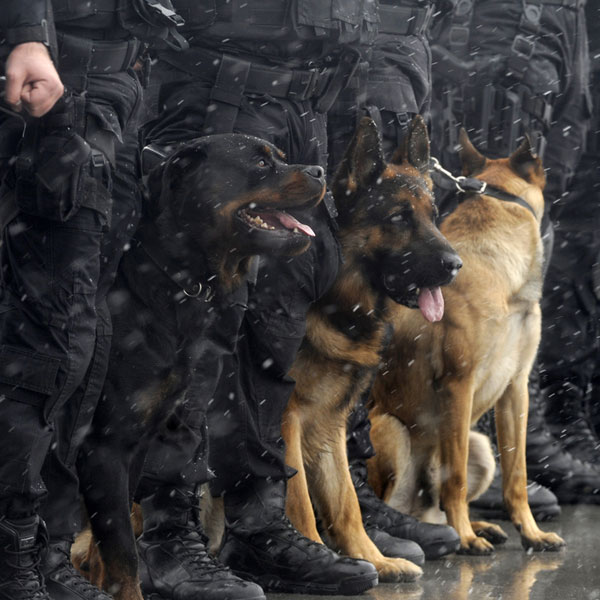 Police Dogs Just The Facts
