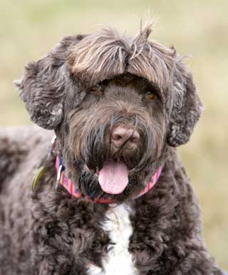 Hypoallergenic Dogs: Are They Really Hypoallergenic?