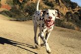 5 Guidelines for Enjoying Off-Leash Dog Areas