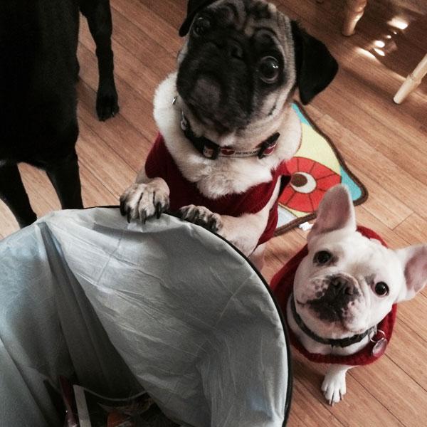 5 Tips for Keeping Your Dog Safe at Hanukkah
