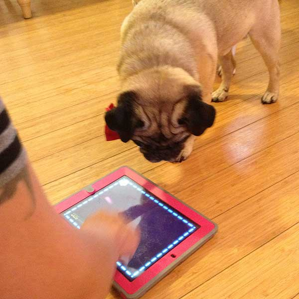 We Test Four iPad Games Designed for Pets