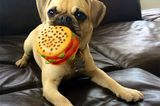 Get Mixed Up With These Precious Puggle Puppy Pictures!