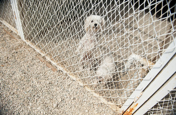 Spread the Word: September Is Puppy Mill Awareness Month