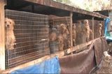 Look Out, Puppy Mills, New USDA Regulations Apply to You
