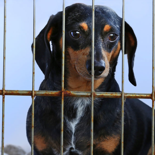 In Case You Need a Reminder: Puppy Mills Are the Worst