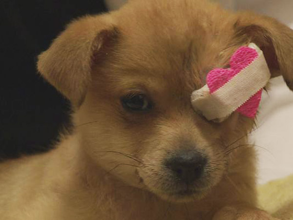Foxy the Puppy Has the Cutest Eyepatch We've Ever Seen