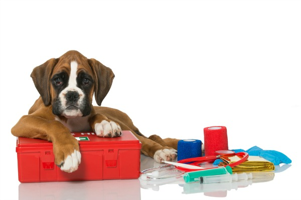 How To Make A Diy Dog First Aid Kit For Car Travel