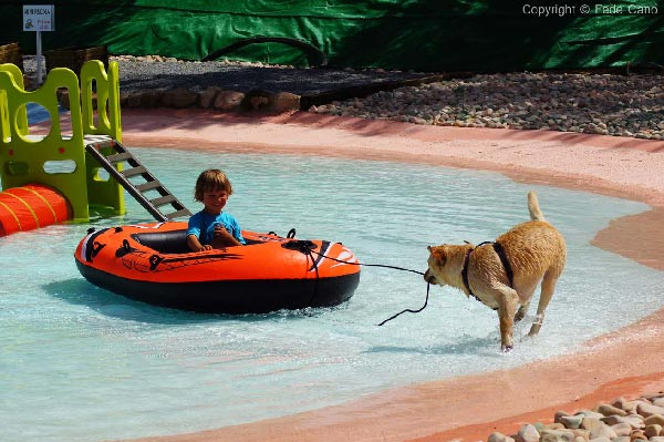 How Far Can A Dog Swim