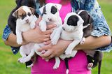 A Beginner's Guide to Finding Responsible Dog Breeders