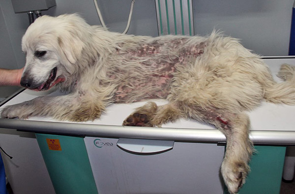 Big Fluffy Dog Rescue Tells a Harsh Tale of a Hit and Run