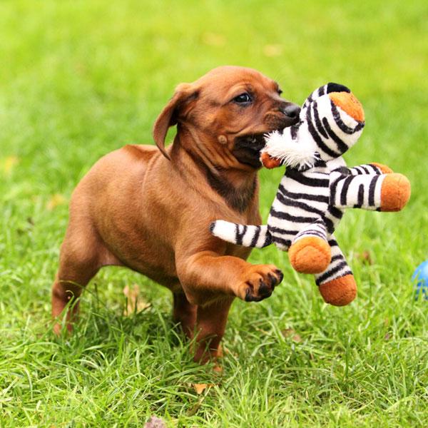 Cute Dog Breeds