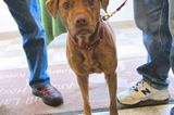 A Stray Dog Who Eluded Capture for Three Years Is Finally Home